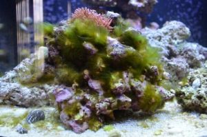 Rêu tảo xuất hiện từ đâu – cách kiểm soát rêu tảo trong bể cá biển