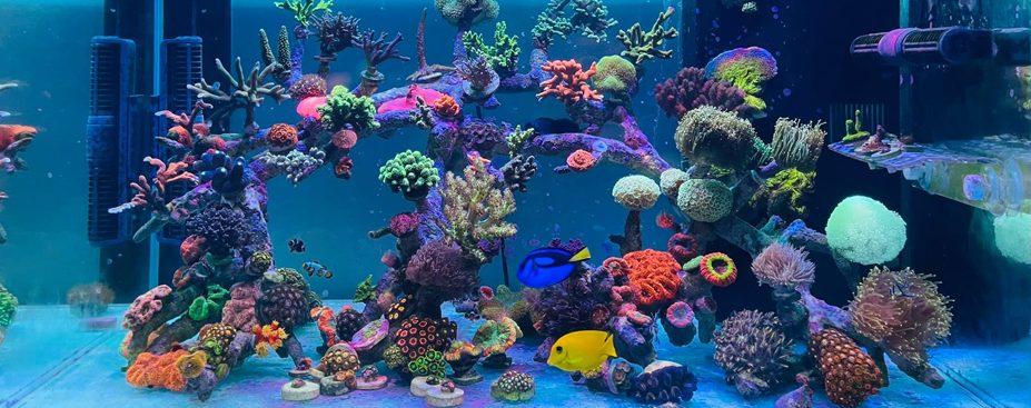 Thiết kế bể cá biển
