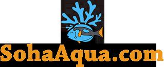 Soha Aqua – Thiết kế, cung cấp thiết bị, san hô cá biển